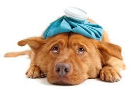 Prevent Animal Poisons