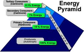 Health Habits Energy Pyramid