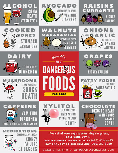 Foods Dogs Should Never Eat