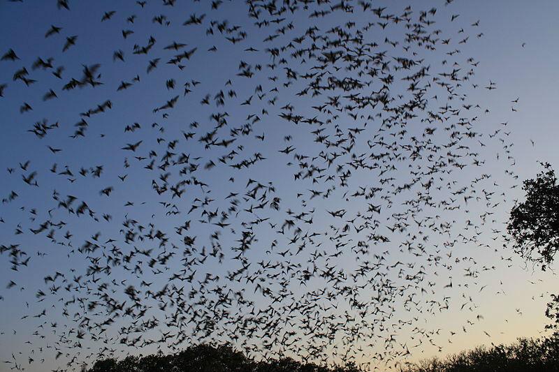 bats deadly diseases